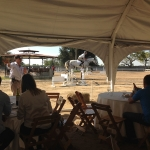Horse auction at Rancho Pampa