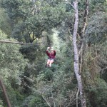 Flying through the canopy