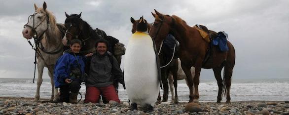 Horseback adventures in Tierra del Fuego