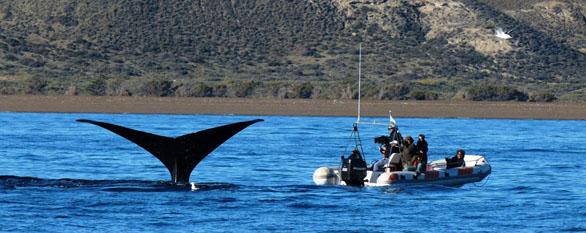 Marine Wildlife Safari in Patagonia