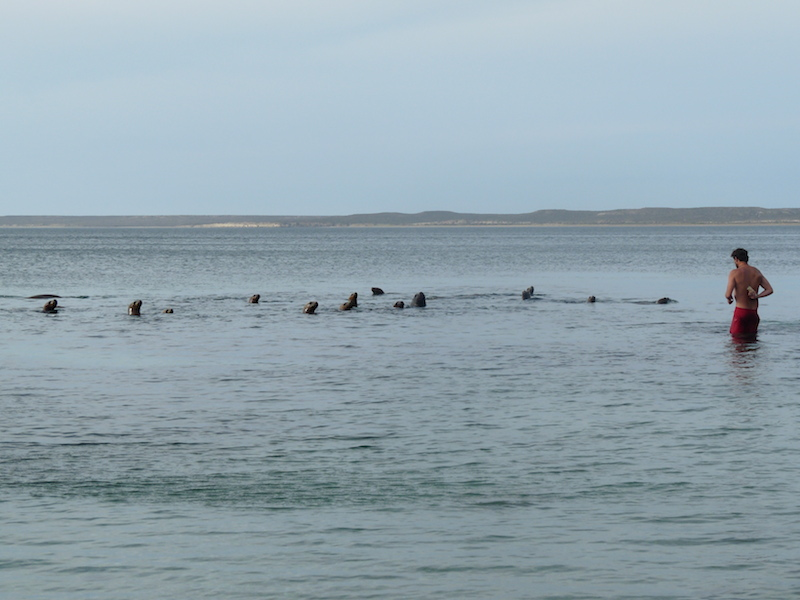 Sea Lion females coming to say hello
